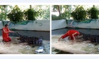 Cuvar Krokodil